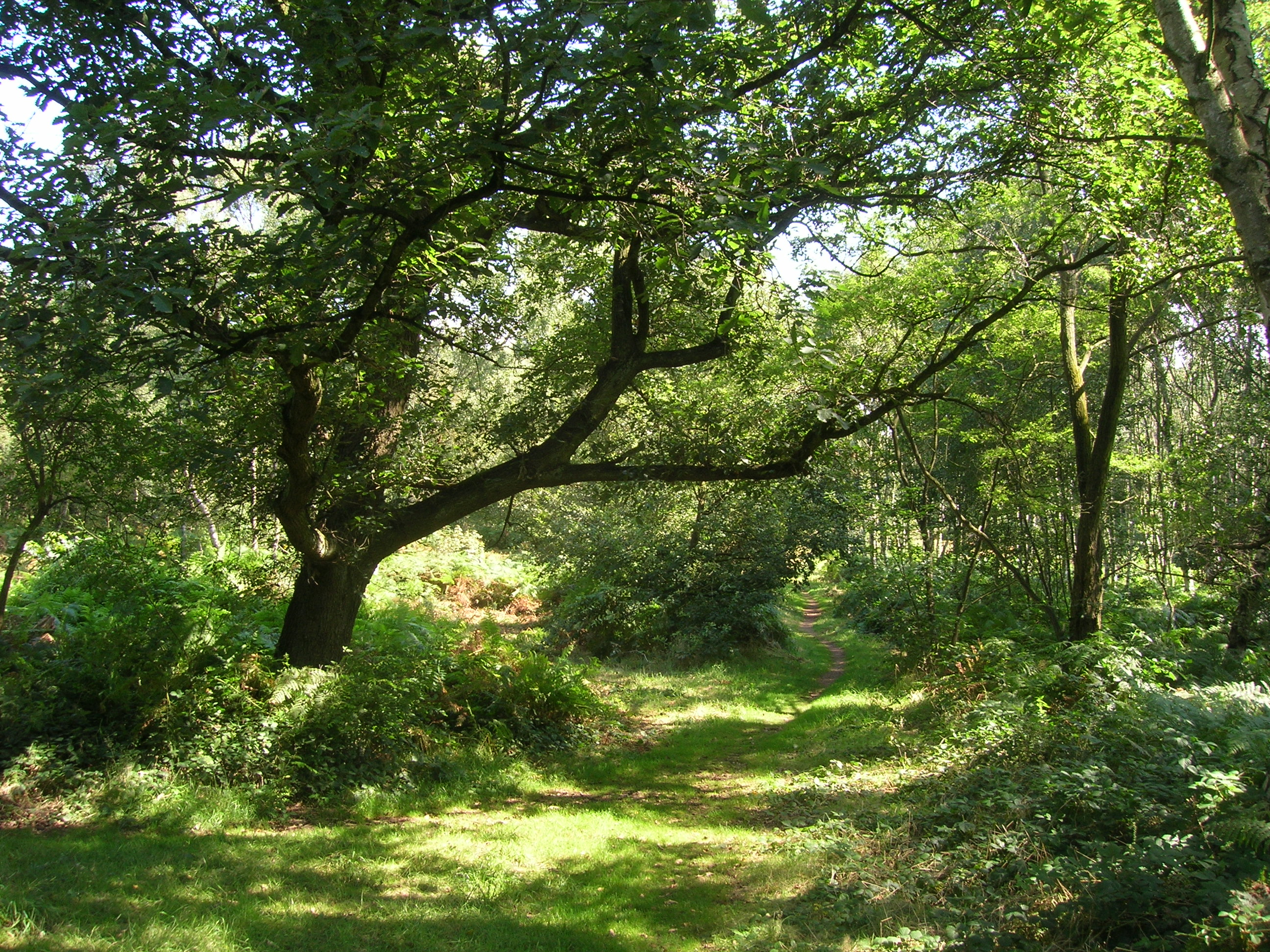 Cockglode and Rotary Woods | Nottinghamshire County Council