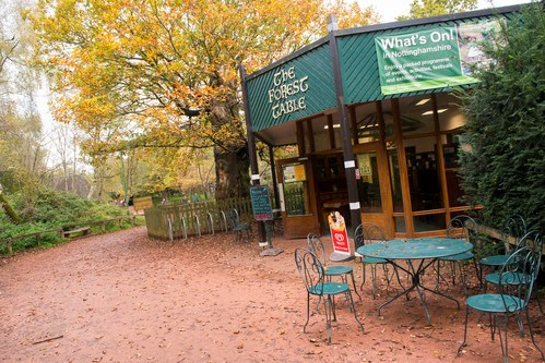 Sherwood Forest and Rufford Abbey reopened