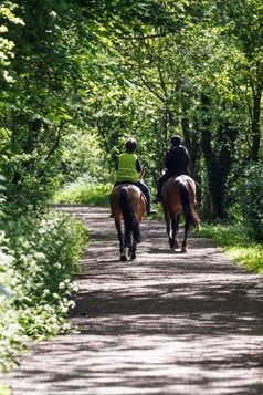 Horse riding on teversal walk